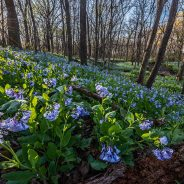 2018 Spring Nature Preview of the Chicago Region