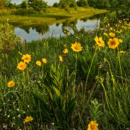 Chicago Region Tops U.S. National Parks in Native Plant Biodiversity! – Part 2
